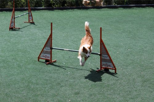 Etapa Mada – I Copa Ducão Royal Canin de Agility
