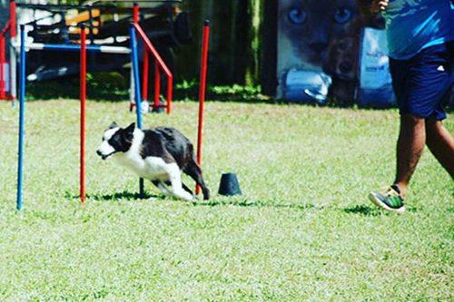 Dog Moke Parque Canino