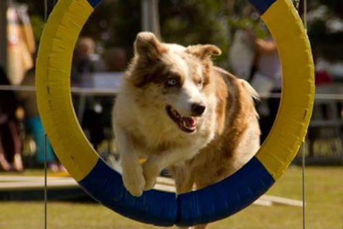 Dog World Parque Canino