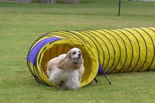 Lata´s Dog
